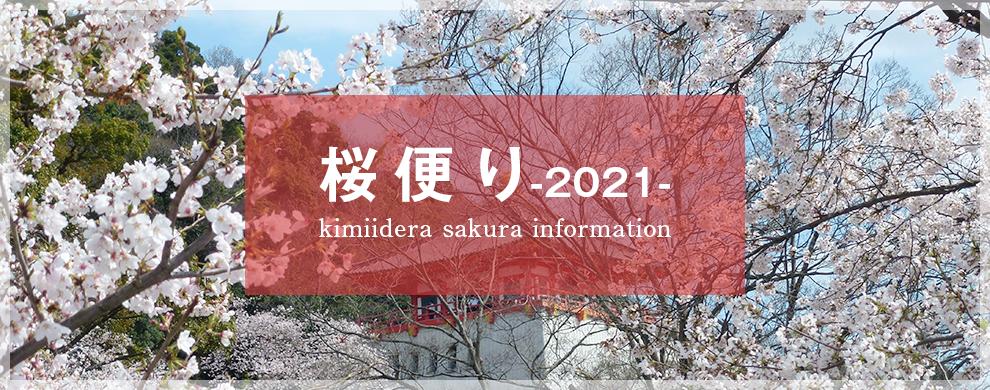 桜便り2021